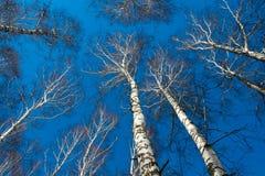 Grön vårskog i solstrålar royaltyfria foton
