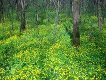 Grön vårskog i solstrålar Arkivfoton