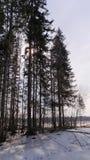 Grön vårskog i solstrålar Arkivfoto