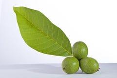 grön valnöt Royaltyfri Foto