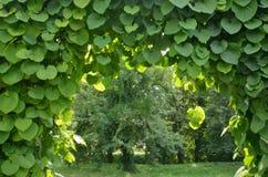 Grön valvgång i en trädgård. Royaltyfria Bilder