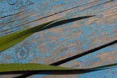 Grön vass på träbakgrund Arkivbilder