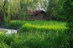Grön vassmarsklan och ett hus Arkivfoton