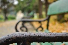 Grön vattenbank för Closeup Royaltyfri Fotografi