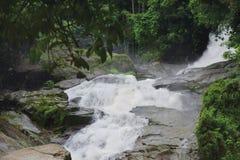 grön vattenfall för skog royaltyfri fotografi