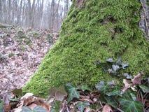 Grön vegetation för träd Arkivfoton