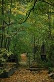 Grön vegetation i den gamla kyrkogården royaltyfria foton