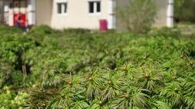 Grön vegetation i parkera arkivfilmer