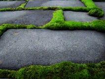 Grön vegetation växte runt om gråa tegelstenar Royaltyfri Bild