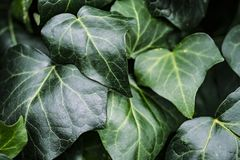Grön vegetativ textur från ett stycke arkivfoto