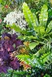 Grön vegetative bakgrund Fotografering för Bildbyråer