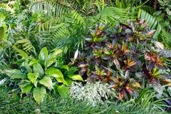 Grön vegetative bakgrund Arkivbilder