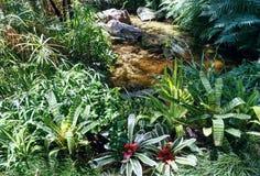 Grön vegetative bakgrund Royaltyfri Bild