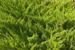 grön vegetative visarstruktur Arkivbild