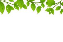 grön vektor för filialer Arkivbilder