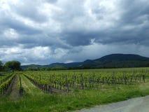 Grön vingård i Frankrike Arkivbild