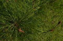 Grön visarväxt på banken av Arkivfoto