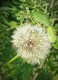 Grön vit blomma Arkivfoto