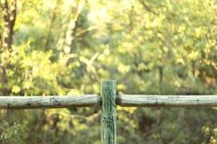 Grön wood staketlinje på en gulaktig bakgrund för suddig natur Royaltyfria Bilder