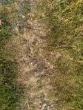 grön yellow för gräs Jordbakgrund Arkivbild