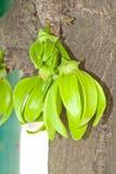 grön ylang för blomma arkivbild