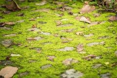 grön zon Royaltyfri Foto