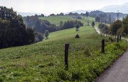 Gröna ängar och en smal bana i bergen Royaltyfri Foto