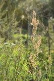 Gröna ängbreddväxter Strålarna av solen ljusnar ängen royaltyfria bilder