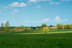 gröna ängtrees Arkivfoton