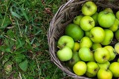 Gröna äpplen i basket.tif Royaltyfri Bild