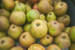 Gröna äpplen i en bunt i höst Royaltyfria Bilder