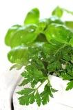 gröna örtar Arkivfoto