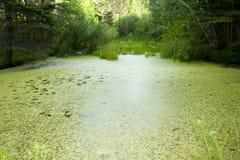 Gröna alg sjö Arkivbilder