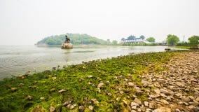 Gröna alger förorenade sjötaihu i wuxi arkivbild
