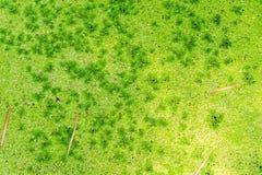 Gröna alger i kanal Royaltyfria Foton