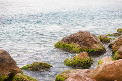 Gröna alger på Songkhla sjön, Thailand Fotografering för Bildbyråer
