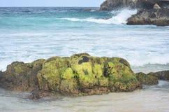 Gröna alger som täcker ett vaggabildande på en strand i Aruba Royaltyfri Fotografi