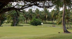 Gröna amongstTrees för golfbana Royaltyfri Fotografi