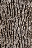 Gröna Ash Bark Arkivfoton