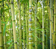 Gröna bambunaturbakgrunder Arkivfoto