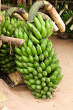 Gröna bananer arkivbild