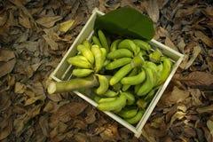 Gröna bananer i wood askar Royaltyfri Foto