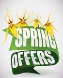 Gröna band och gula orkidér för vårerbjudanden, vektorillustration Royaltyfri Bild