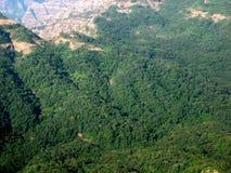 gröna berg för skog royaltyfri foto