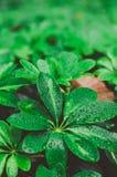 Gröna blad efter regnet arkivfoto