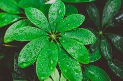 Gröna blad efter regnet royaltyfri bild