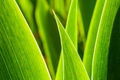 Gröna blad i abstrakt zenstil Royaltyfri Bild