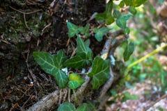 Gröna blad och en journal Arkivbild