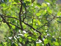 Gröna blad och stam Arkivfoton