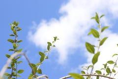 Gröna blad, tropiska folhasverdes fotografering för bildbyråer